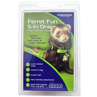 ferret fun 5-in-one! on lovemypets.com