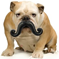 Humunga Stache Ball™ - Mini