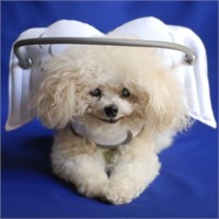 Dog Suppliespet Home & Travel Essentialspet Assistance Stairs & Rampsmuffins Halo White Angel Wings
