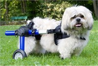 Walkin Wheels for Handicapped Pets Small