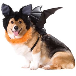 Image of Animal Planet Bat Dog Costume - X-Small