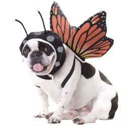 Image of Animal Planet Butterfly Dog Costume - Small