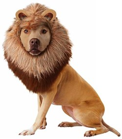 Image of Animal Planet Lion Dog Costume - Medium