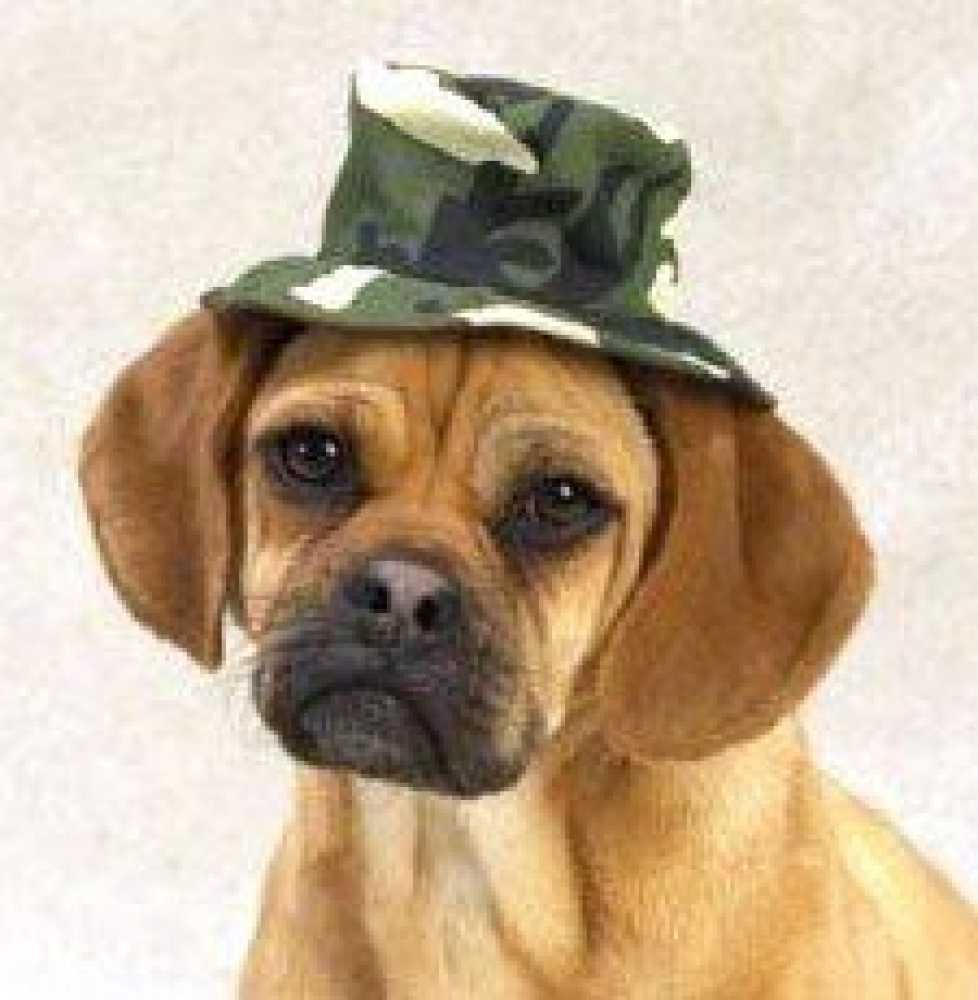 "Casual Canine Green Camo Bucket Hat Small (5"")"
