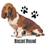 Basset Hound T-Shirt Styling With Paws