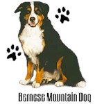 Bernese Mountain Dog T-Shirt Styling With Paws