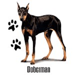 Doberman Pinscher T-Shirt Styling With Paws