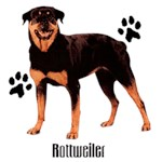 Rottweiler T-Shirt Styling With Paws