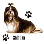 Shih Tzu T-Shirt Styling With Paws