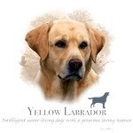 Yellow Lab T-Shirt Best Friend