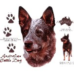 Australian Cattle Dog T-Shirt History Collection