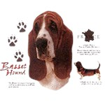 Basset Hound T-Shirt History Collection