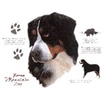 Bernese Mountain Dog T-Shirt History Collection