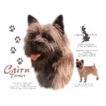 Cairn Terrier T-Shirt History Collection