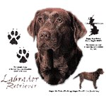 Chocolate Lab T-Shirt History Collection