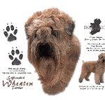 Wheaten Terrier T-Shirt History Collection
