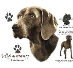 Weimaraner T-Shirt History Collection