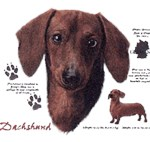 Dachshund T-Shirt History Collection