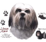 Lhasa Apso T-Shirt History Collection