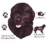 Newfoundland Dog T-Shirt History Collection