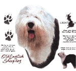 Old English Sheepdog T-Shirt History Collection