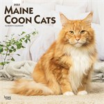 Maine Coon Cat 2017 Calendar