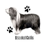 Bearded Collie T-Shirt Profiles
