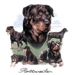 Rottweiler T-Shirt Different Poses