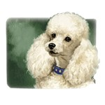 Poodle T-Shirt Linda Picken