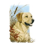 Yellow Lab T-Shirt Linda Picken