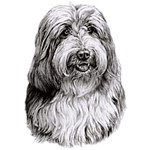 Bearded Collie T-Shirt Eye Catching Detail