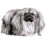 Pekingese T-Shirt Eye Catching Detail