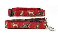 Border Terrier Collar & Leash