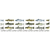 Catfish T-Shirts