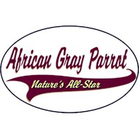 African Gray Parrot Shirts