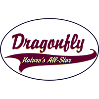 Shirts: Dragonfly