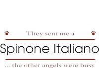 Spinone Italiano Shirts