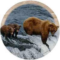 Brown Bear Coasters