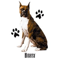 Boxer T-Shirt - Styling With Paws