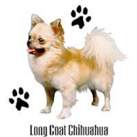 Chihuahua T-Shirt - Styling With Paws Long Haired