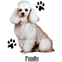 White Poodle T-Shirt - Styling With Paws