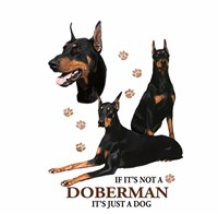 Doberman Pinscher Shirts