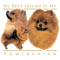 Pomeranian T-Shirt - My Best Friend Is