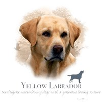 Yellow Lab Shirts