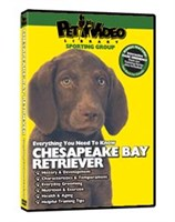 12789 Chesapeake Bay Retriever Video