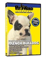 French Bulldog Video