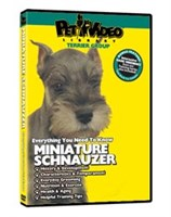 Schnauzer Video