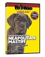 12810 Neapolitan Mastiff Video