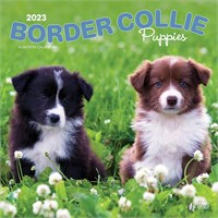 2012 Border Collie Puppies Calendar