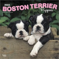 2012 Boston Terrier Puppies Calendar